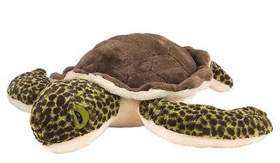 Meeresschildkröten Baby